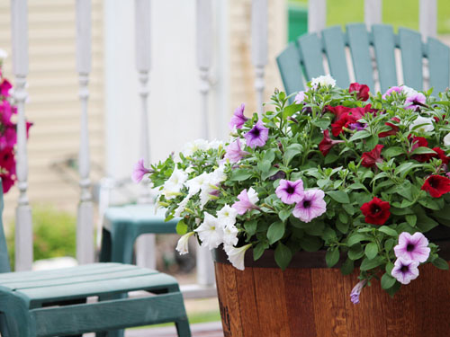 A lovely planter full of flowers on the deck